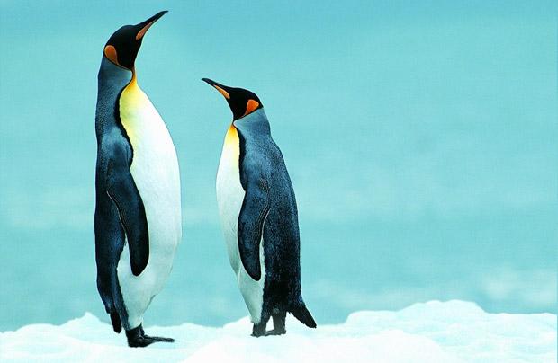 ペンギンアップデートイメージ画像